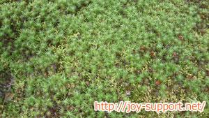東福寺の庭園の苔