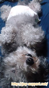 犬が未去勢-問題