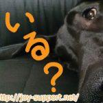 犬の保険は必要なの?加入はトータルで考えると損!?