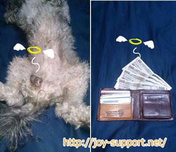 犬の去勢費用