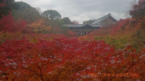 東福寺-紅葉