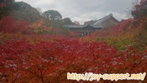 東福寺の紅葉の様子