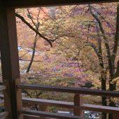 貴船神社-龍船閣からみる紅葉