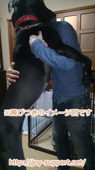 犬-とびつきイメージ画像