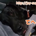 犬への体罰(しつけ)に効果はあるの?あなたの考え犬とズレてませんか?