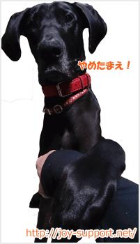 犬が体罰をとめる