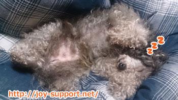 犬が寝ている画像
